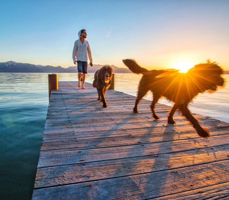 perritos viajeros