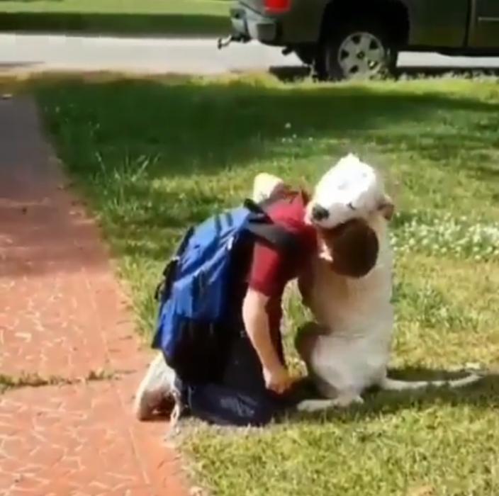 perro espera a su dueño