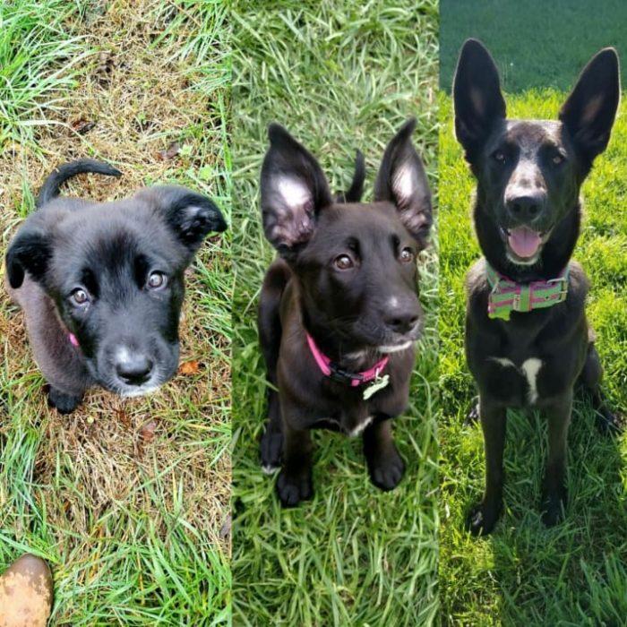 perros combinados