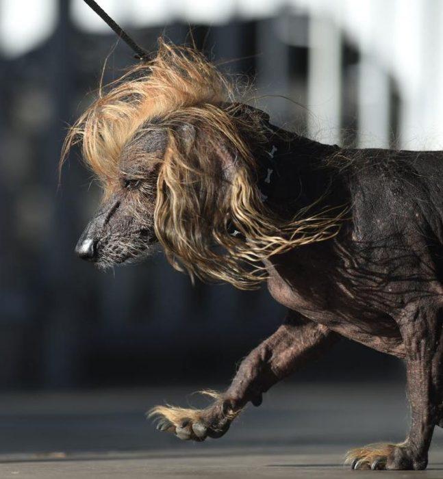 perritos más feos
