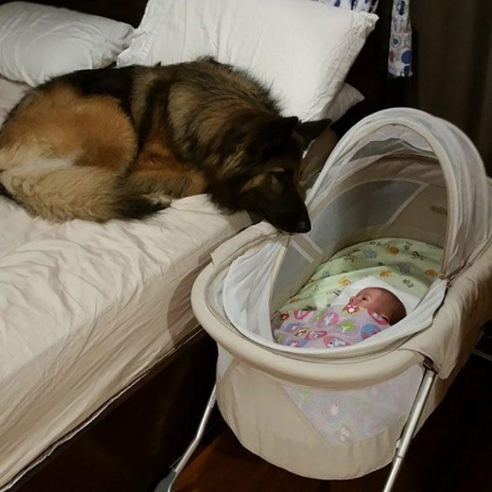 perritos haciendo cosas buenas por sus dueños