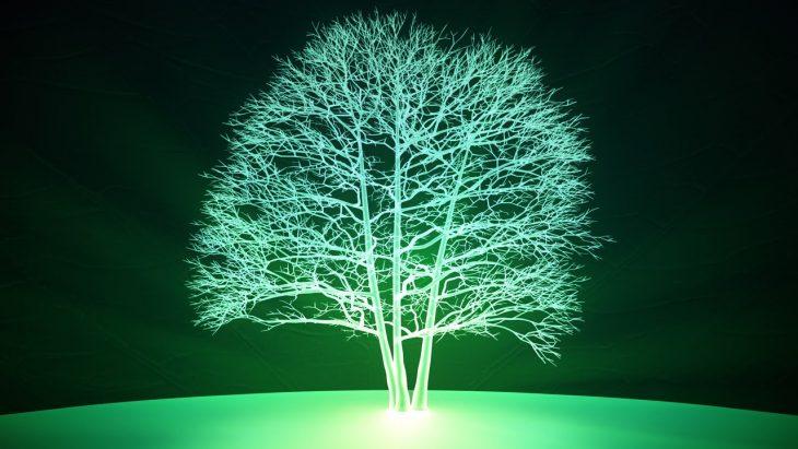 plantas bioluminiscentes