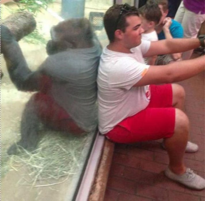 gorila y hombre que por ilusión óptica parecen vestidos iguales