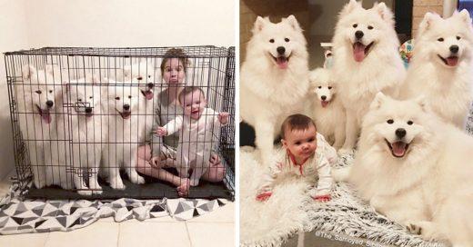 Cover Mujer comparte fotos de su familia y sus perros Samoyedos