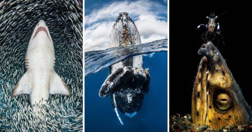 Cover Fotografías bajo el agua