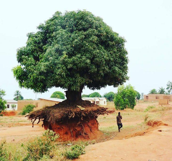 Árbol en Tanzania