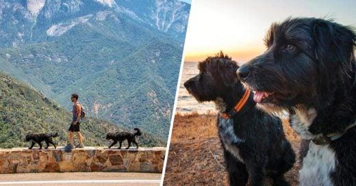 Cover Salvó a dos perritos abandonados en el desierto y se los llevó a conocer los Estados Unidos