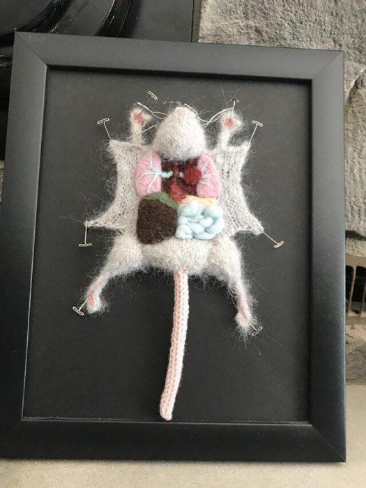 tejido de la anatomía de un ratón