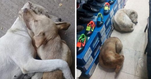 Cover Zapatería permite que los perros sin hogar duerman dentro para protegerse de la lluvia