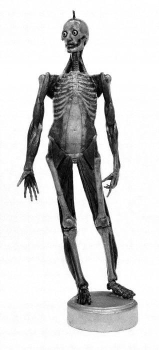 Figura de cera para enseñar anatomía, alrededor de 1700