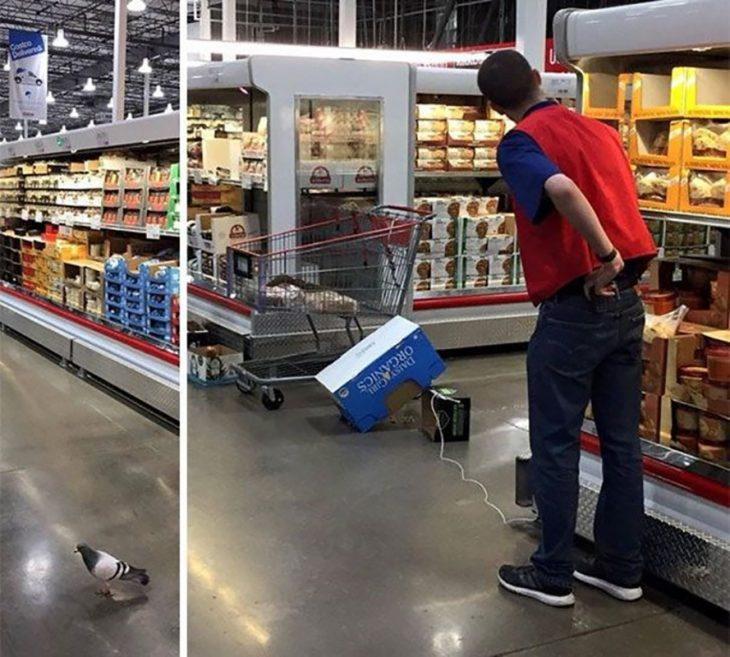empleado de Cotsco tratando de atrapar a una paloma