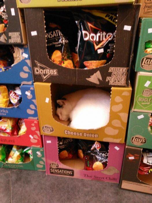 gato en caja de papitas