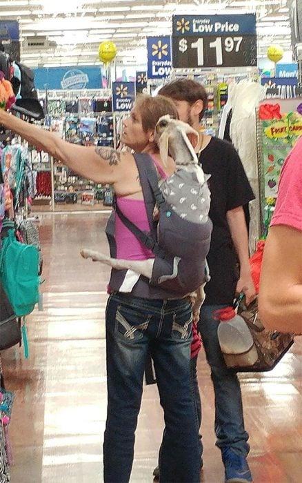 mujer llevó a su cabra al supermercado