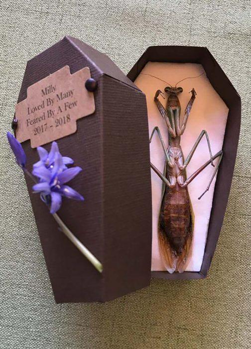 funeral de mantis