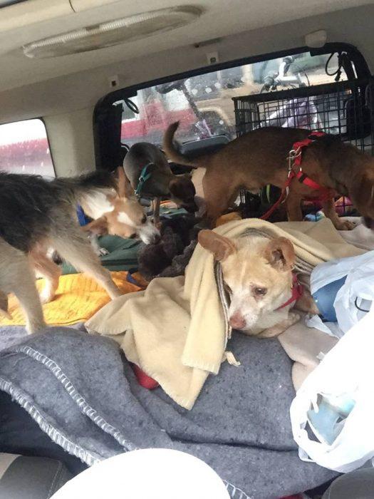 perritos en un coche