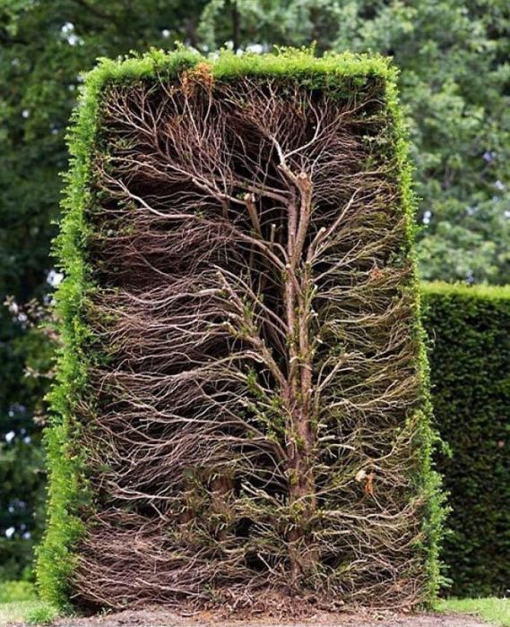El interior de un arbusto