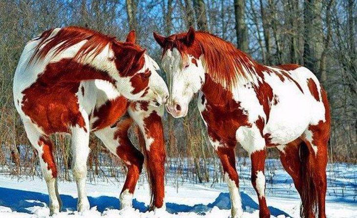 animales con marcas inusuales