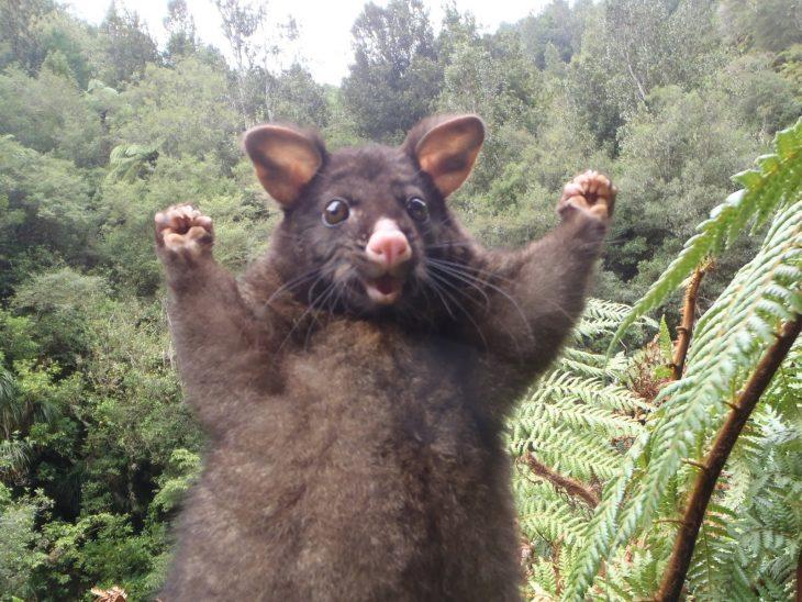 ANIMALES CON EXPRESIONES DIVERTIDAS RECREOVIRAL.COM
