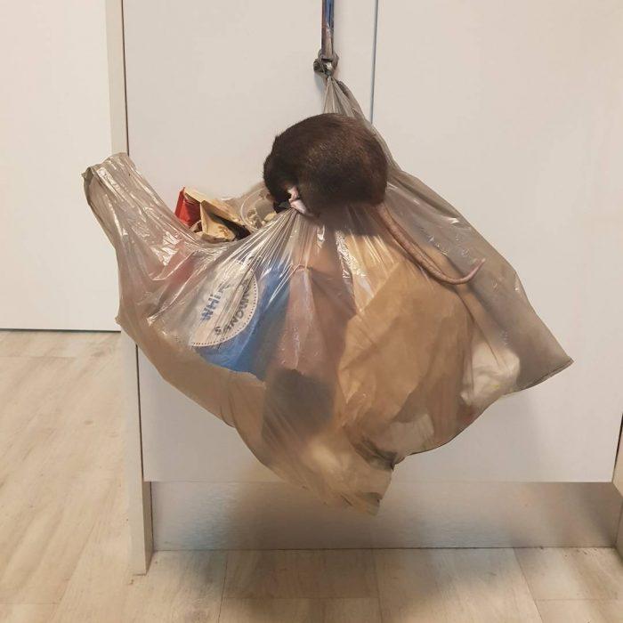 bolsa plástico rata