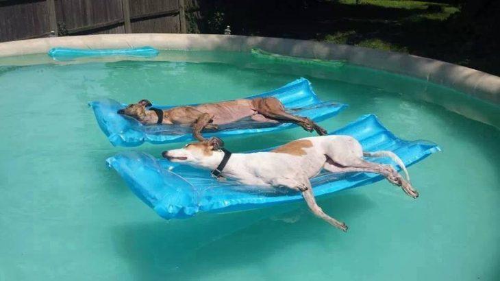 Animales refrescandose ante la ola de calor recreoviral.com