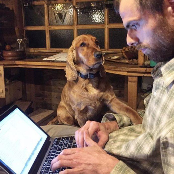 perrito pide atención