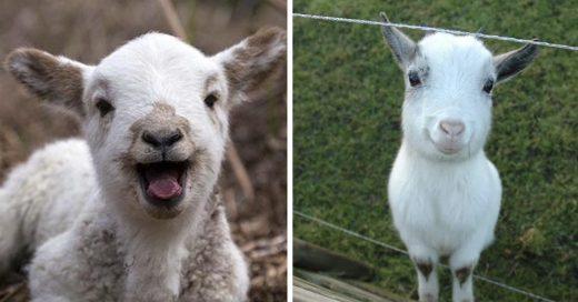 Cover las cabras aman cuando sonríes