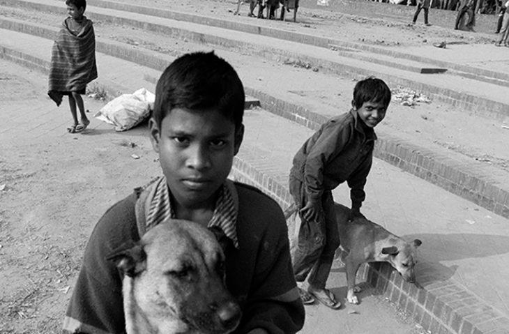 niños de las calles con sus perros