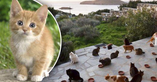 Cover Se buscan trabajadores para cuidar gatos en una isla paradisiaca