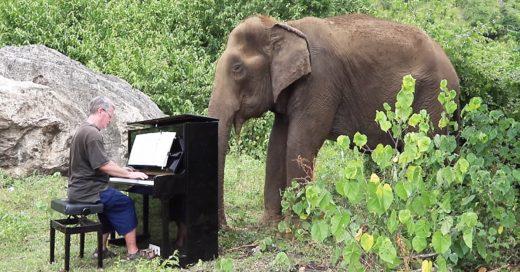 Cover Elefante hembra ciega disfruta de la música de Bach y Beethoven