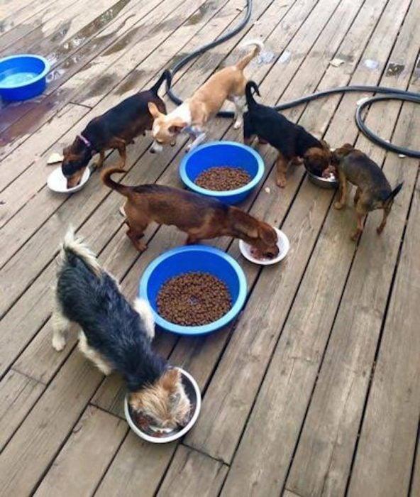 perritos comiendo croquetas