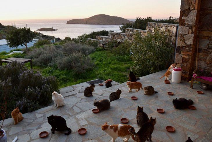 cuidador profesional de gatos