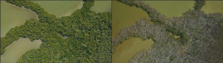 Daño del huracán Maria en Everglades , Florida