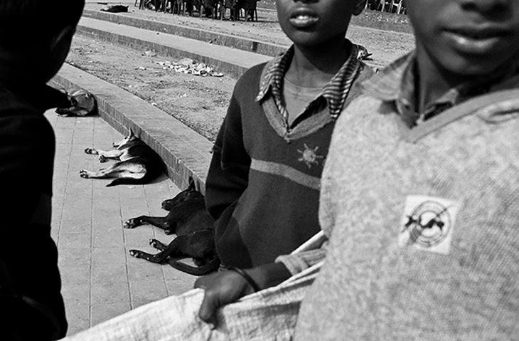 niños de bangladeh y perritos de la calle