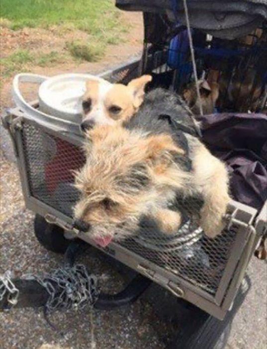 dos perritos en un carro