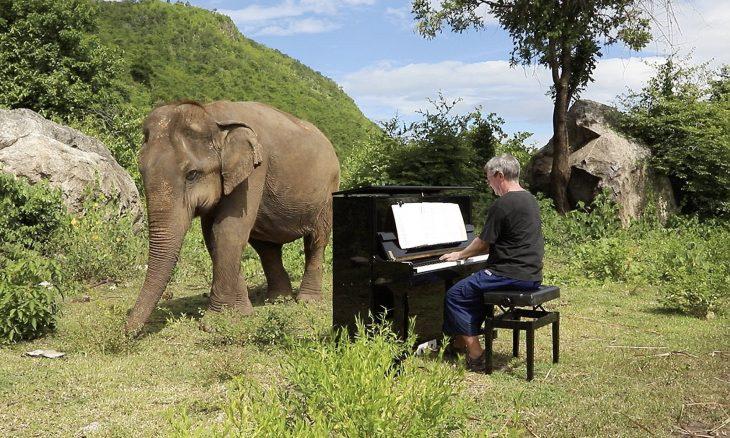 elefante ama la música