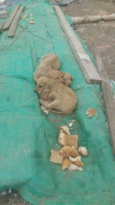 perritos sobre una lona verde
