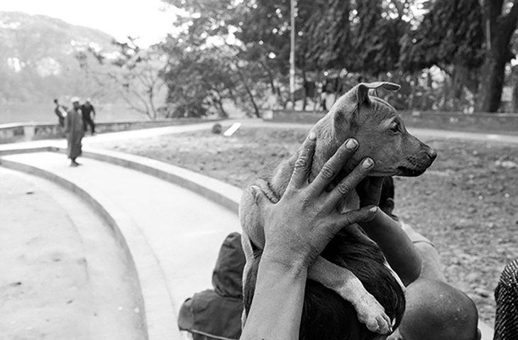 foto a blanco y negro de cachorro de la calle