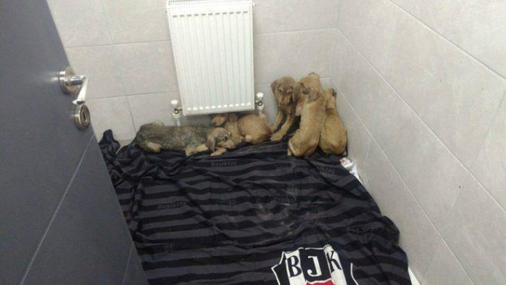 perritos en un rincón de un cuarto