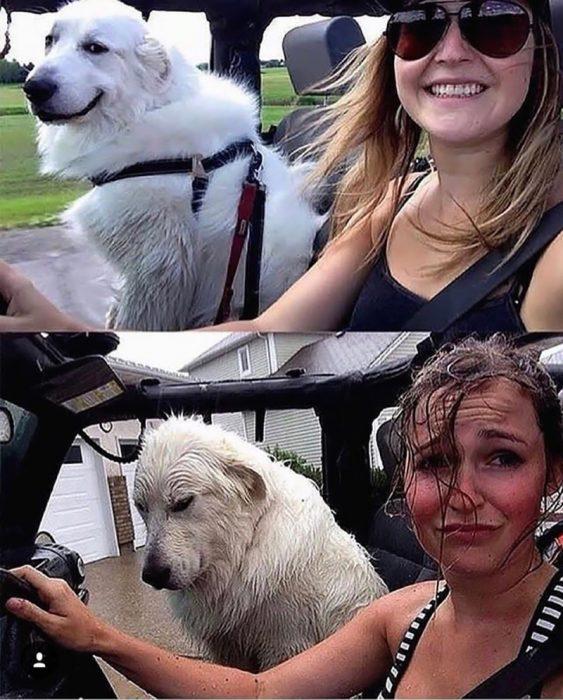perro y humana mojados