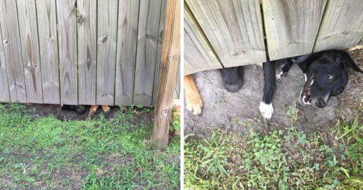 Cover Perritos metiches espían a su vecino