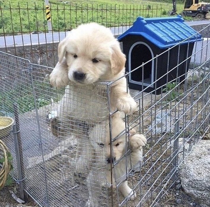 cachorritos tratando de escapar de una jaula