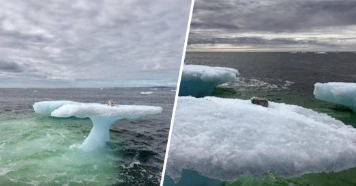 Cover Creyeron que era una foca en un iceberg