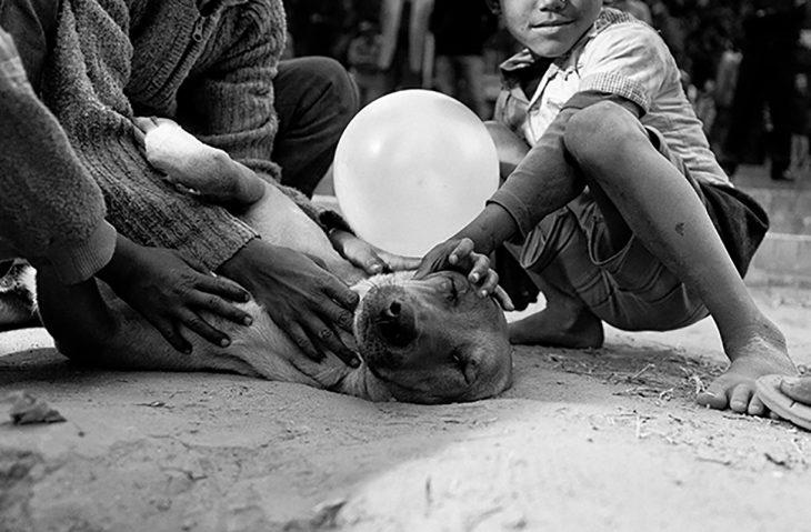 niños acariciando a perros