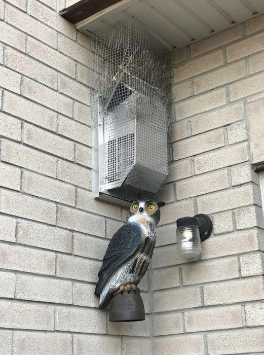 hombre lucha contra aves por años