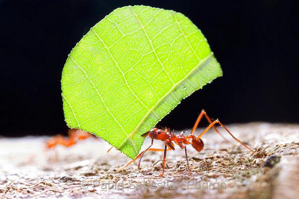 hormigas realizan funeral