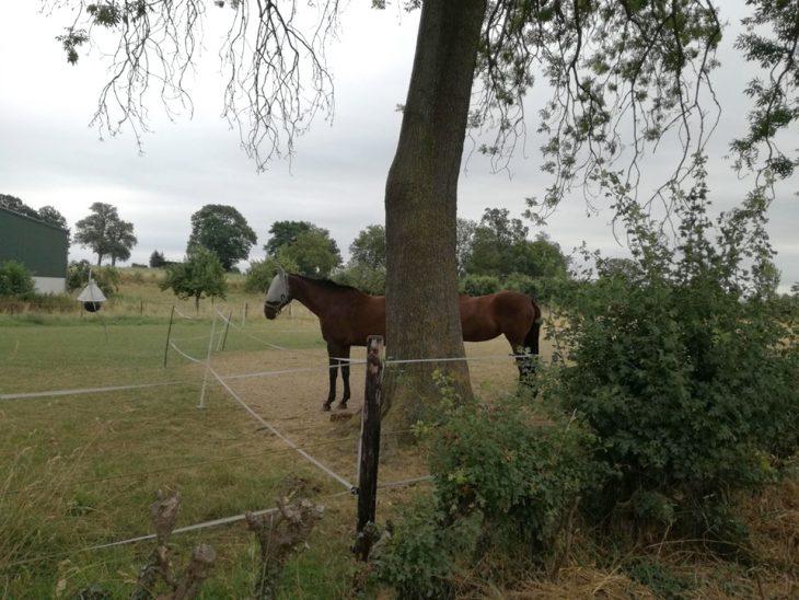 perspectiva caballo largo