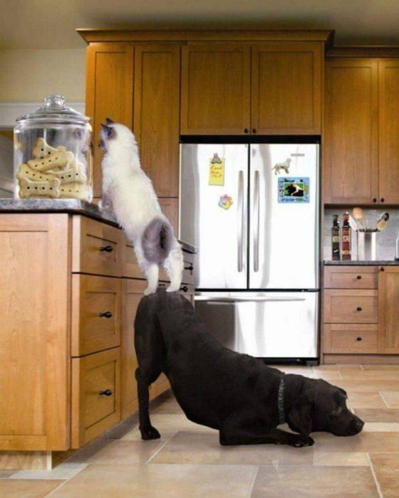 perro y gato robando galletas