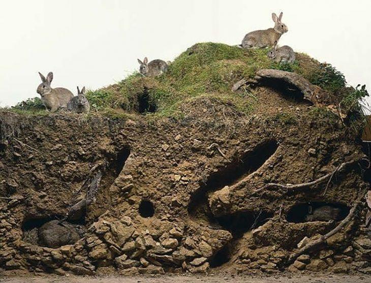 Madriguera de conejos