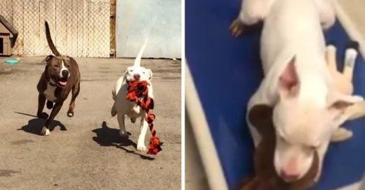 Cover Una perrita sorda llora porque su mejor amigo sí pudo encontrar un hogar