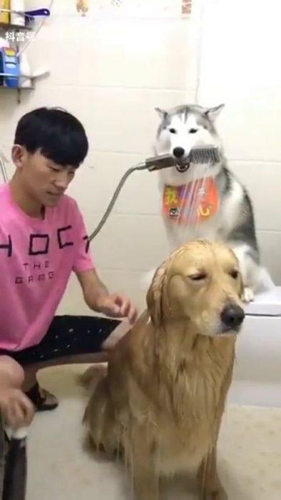 perrito ayudando a bañar a otro perrito